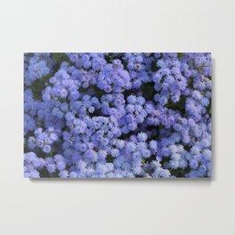 Ageratum Flowers Metal Print