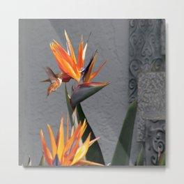 Hummingbird Meets Bird of Paradise Metal Print