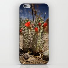 Prickly Beauty iPhone & iPod Skin