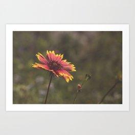 Texas Wildflower Art Print