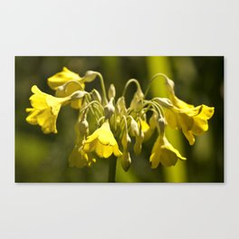 Yellow Drop Bloom Canvas Print