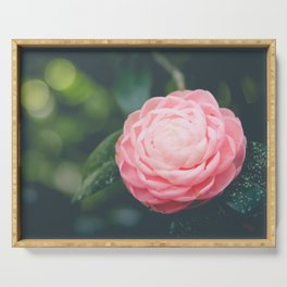 Pink Camellia Flower Photograph Serving Tray