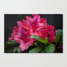 Savoring Every Moment Canvas Print
