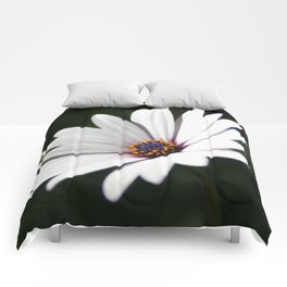 Daisy flower blooming close-up Comforters