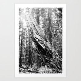 Torn Tree Art Print