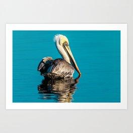 Bird - Brown Pelican - Study 4 Art Print