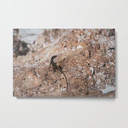 Lizard Rock Colorized Reptile / Animal / Wildlife Photograph Metal Print