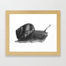 Snail Study Framed Art Print