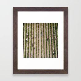 Grape Vine Framed Art Print