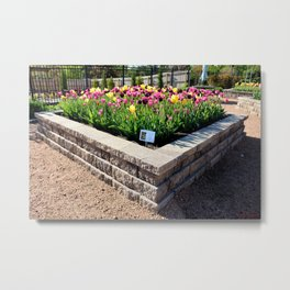 "Muscogee (Creek) Nation - Honor Heights Park Azalea Festival, Tulip ""Critical Mass"" Metal Print"