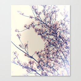 Apple Blossoms, Light Pink, Light, Soft, Marco, Branches Canvas Print
