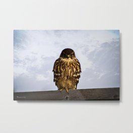 Merlin Falcon Metal Print