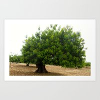 Mallorcan tree Art Print