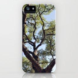 Live Oaks iPhone Case