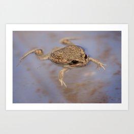Frog Art Print