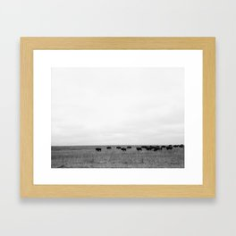 Buffalo Roam Framed Art Print