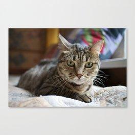 Soviet Cat Canvas Print