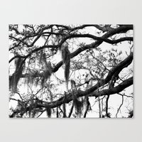 spanish Canvas Prints featuring Spanish Moss by MorganLoriPhoto