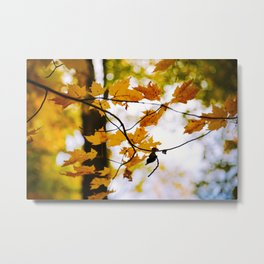 Fall leaves Metal Print