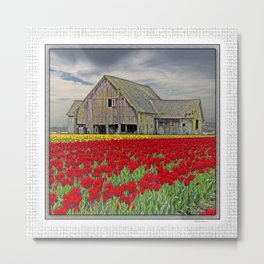 RED TULIPS AND BARN SKAGIT FLATS Metal Print
