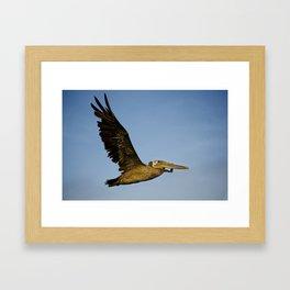 Pelican Fly By Framed Art Print