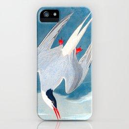 Arctic Tern Bird iPhone Case