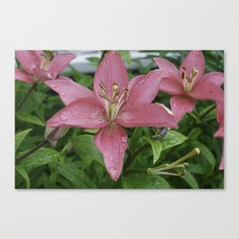 Pink lilly with a water drops Canvas Print