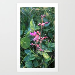 Pink and Morning Dew Art Print