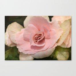 soft Begonia Canvas Print