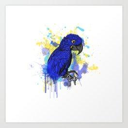 Hyacinth macaw Hymie Art Print