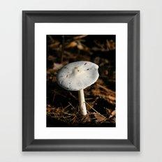 mushroom in the sun Framed Art Print