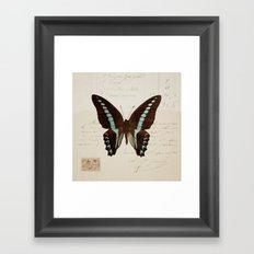 blue spotted butterfly Framed Art Print