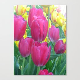 Sweet Spring Tulips Canvas Print