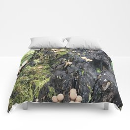 Trail of Puffballs Comforters