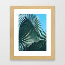 Cuban Palm Tree Framed Art Print