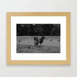 sheep black&white Framed Art Print