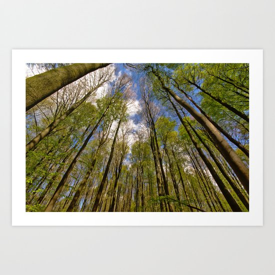 looking up to the trees in the forest Art Print