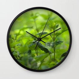 Fresh summer herbs in the garden Wall Clock