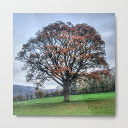 Winter Oak Metal Print