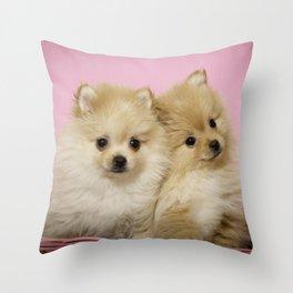 Pink Pomeranian Brothers Throw Pillow