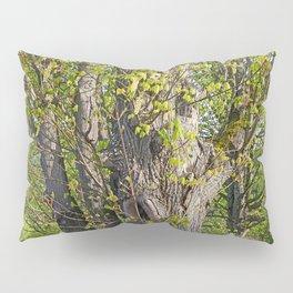 EMERGING BIGLEAF MAPLE IN SPRINGTIME Pillow Sham