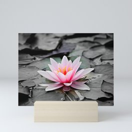 Pink Waterlily on Black Gothic Leaves. Mini Art Print