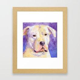 Dogo Argentino Framed Art Print
