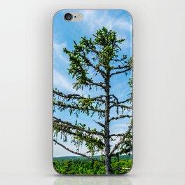 Conifer Tree Top iPhone Skin