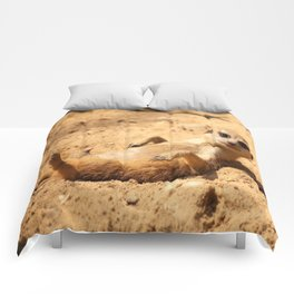 Meerkat Suricat suricatta Sunbathing #decor #society6 Comforters