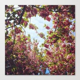 Cherry Blossom Delight 2 Canvas Print