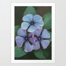 Blue Periwinkles - British Wildflowers Art Print