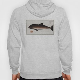 Vintage Illustration of a Dolphin (1785) Hoody