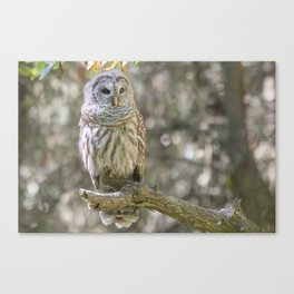 First Meeting Canvas Print