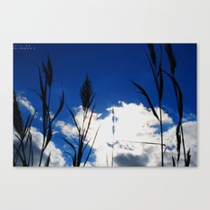 Reeds in the Sun Canvas Print